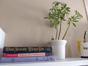 Arboricola Umbrella Plant