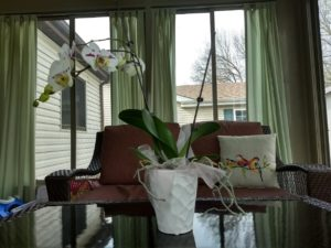 Aldi orchid