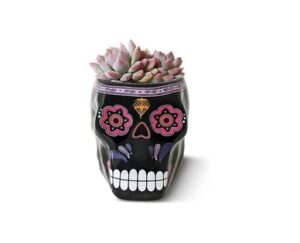 Day of the Dead Succulent
