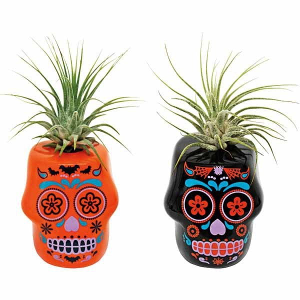 Mini Day of the Dead Air Plant