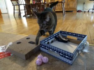 Heart to Tail Cat Activity Box