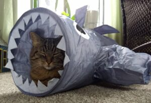 Heart to Tail Cat Shark Tunnel