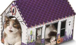 Heart to Tail Halloween Cat Scratching Playhouse