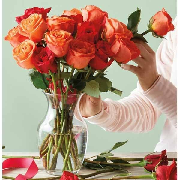 Valentine's Day 12-Stem Rose Bouquet