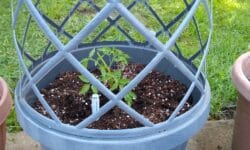 Gardenline Lattice Planter