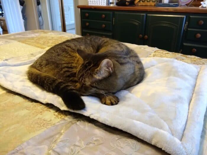 Heart to Tail Cat Warming Mat
