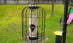 Gardenline Caged Bird Feeder