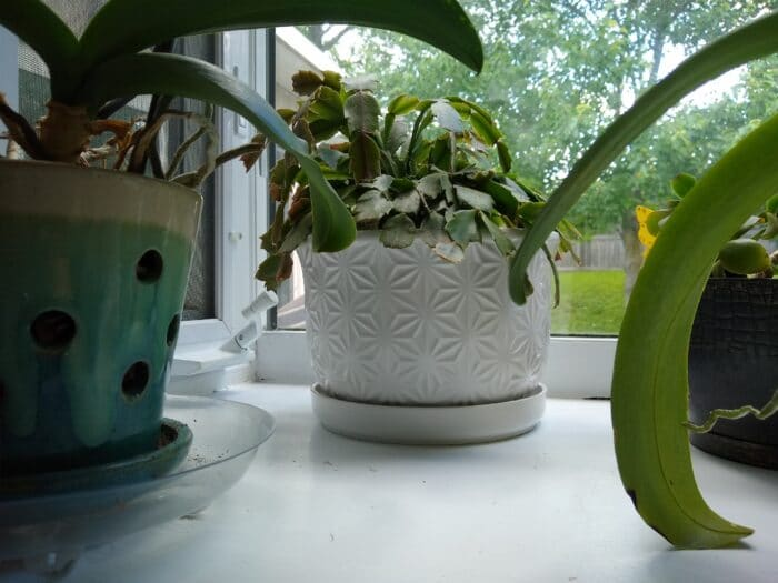 Belavi 8 Inch Decorative Planter